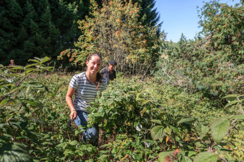 Laura tirette cueillette framboisier feuilles