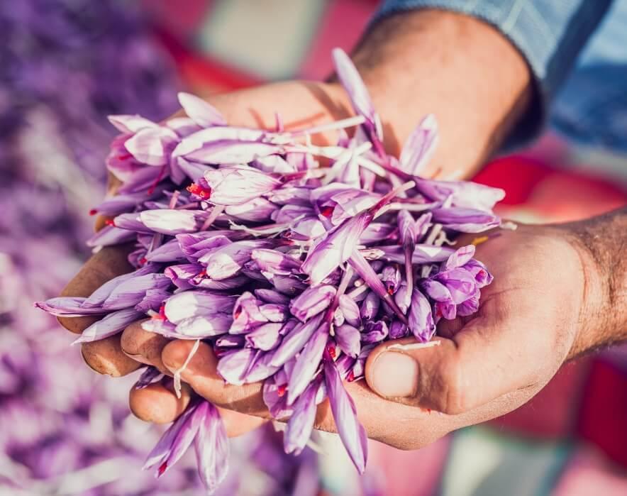 Fleur Crocus Pistil Safran Bio