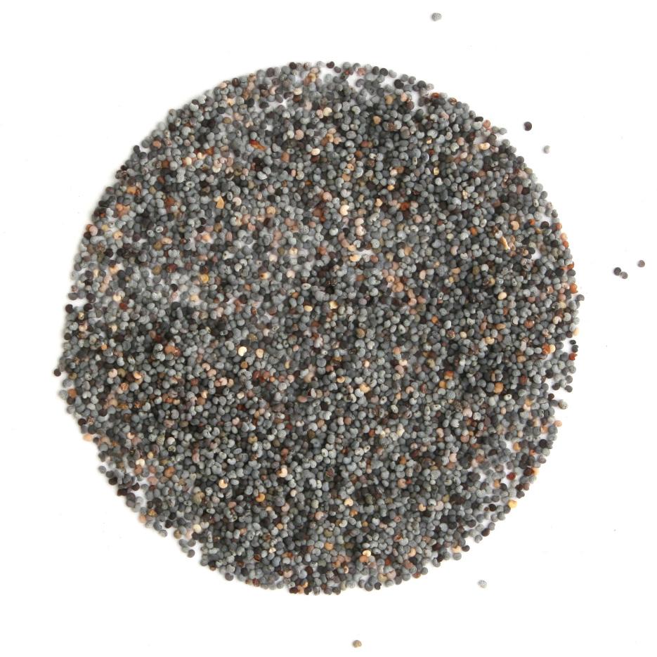 Arcadie pavot graines bio