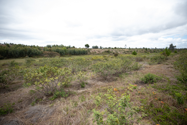 Domaine de Moramanga Madagascar Phael Flor Arcadie Cook