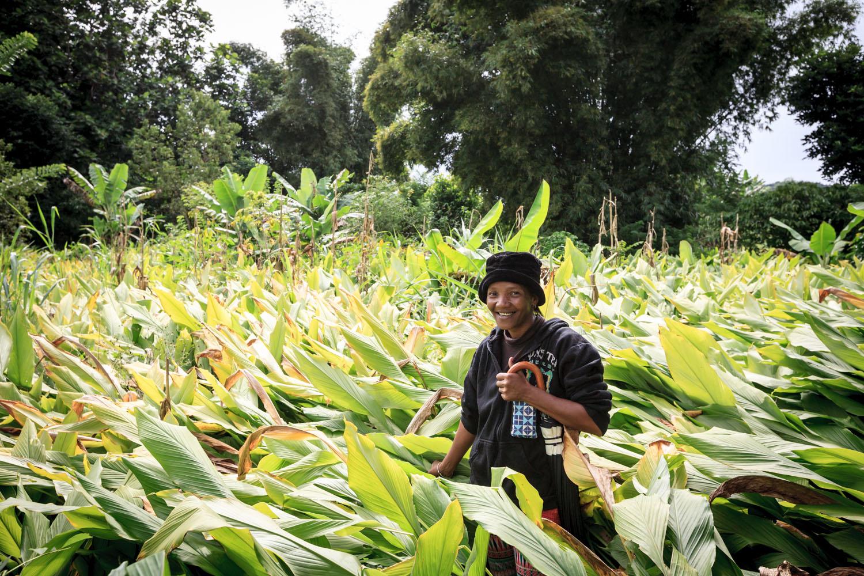 Parcelle Productrice Curcuma Bio Madagascar Cook