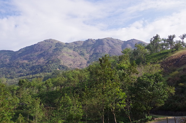 Nelliyampathy Inde domaine protégé biodiversité