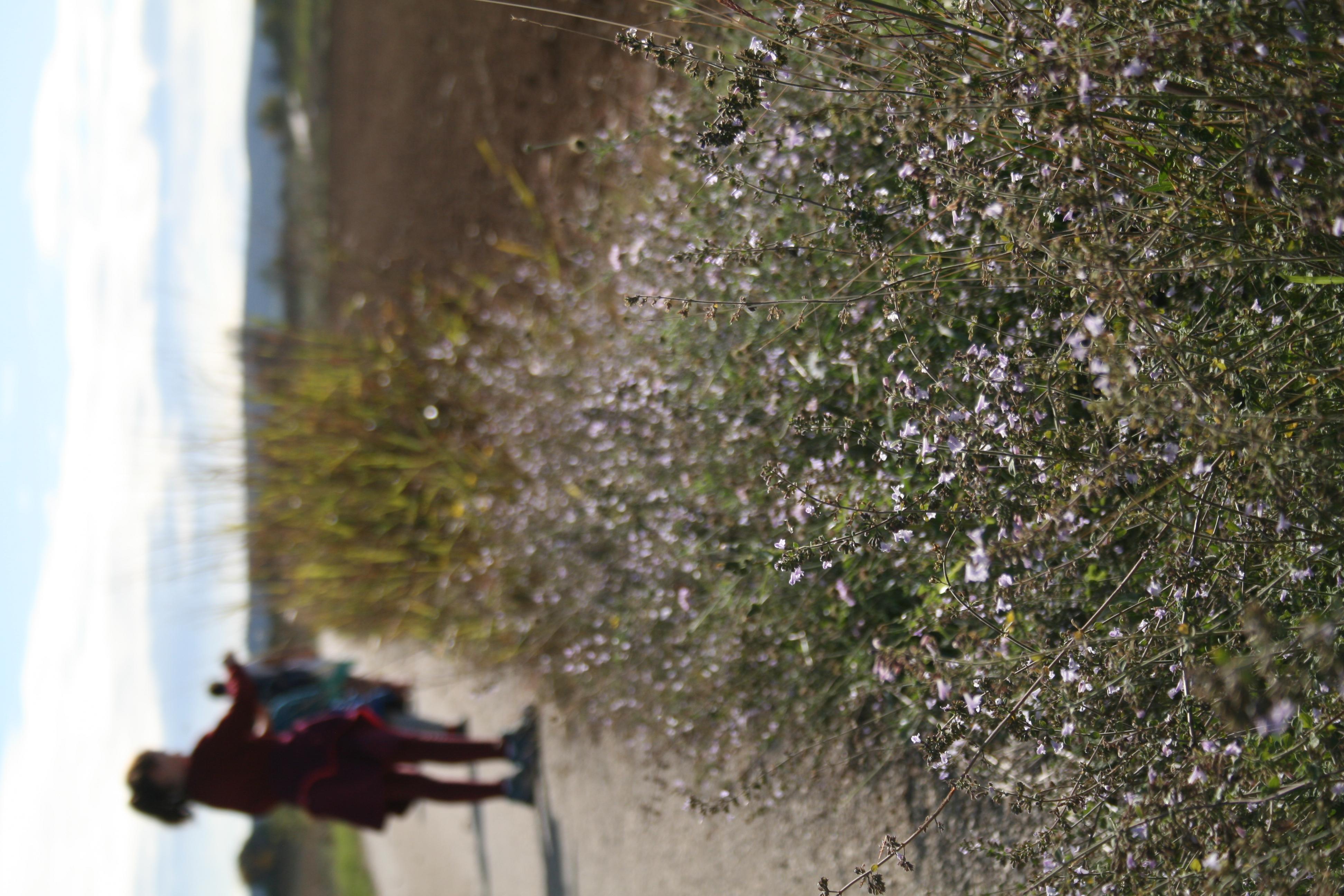 chemin de cueillette de plantes sauvages