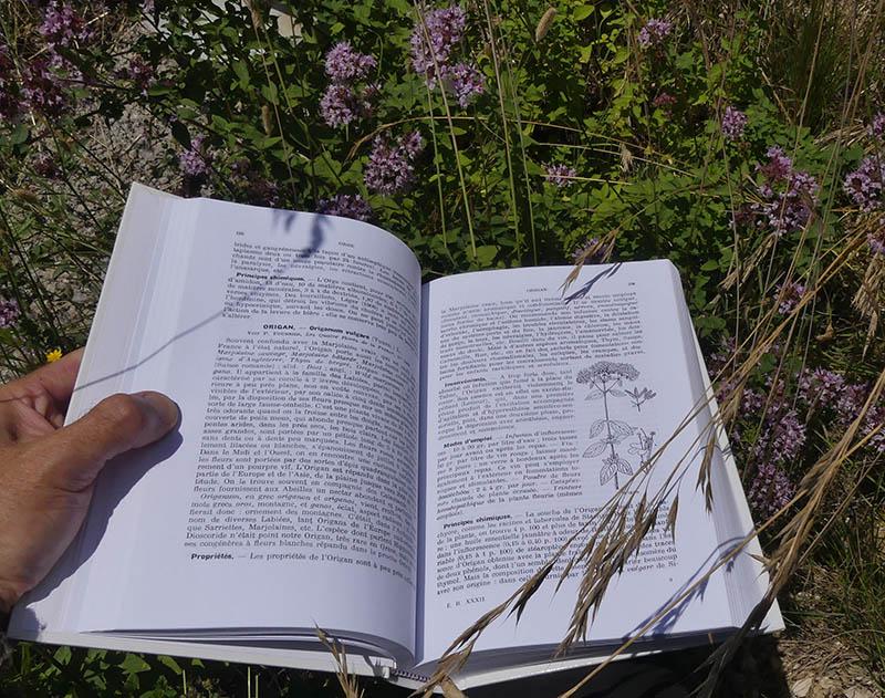 ouvrage d'identification des plantes