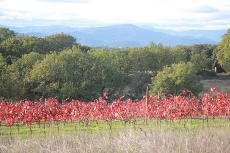 vigne rouge Alicante